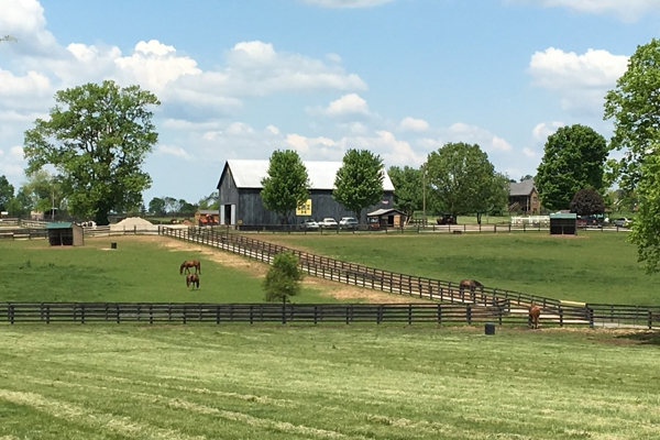 Lexington Horse Farm tour during our Kentucky Derby travel package