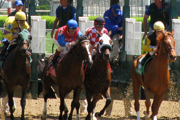 Horses at the Start Line of The Kentucky Derby